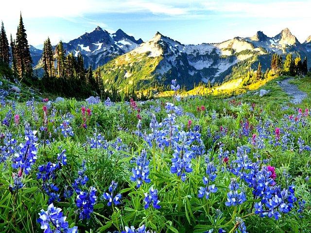 Горы Бештау весной