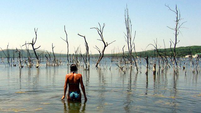 Паводок на озере Тамбукан. Погибшие деревья.