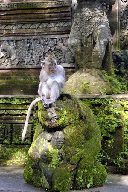 Обезьяна в Индии священное животное